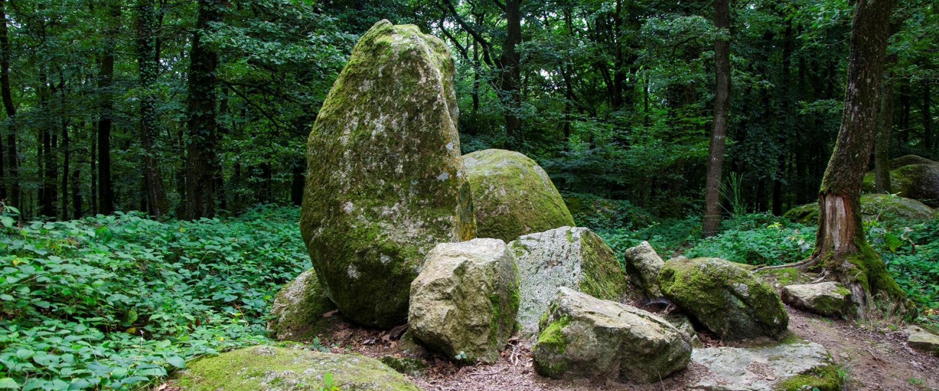 Randonnée au Bois du Tay à Hambers en Mayenne