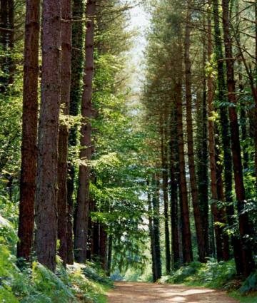 Forêt du Bois du Tay à Hambers en Mayenne