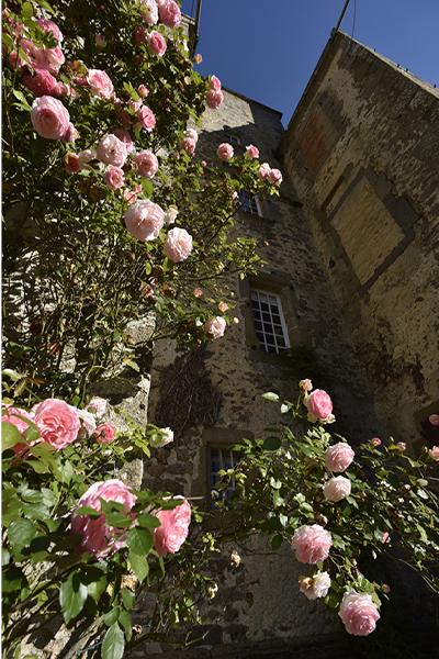 Château-de-gourgon-roses